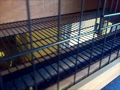 Wire mesh floor hutch